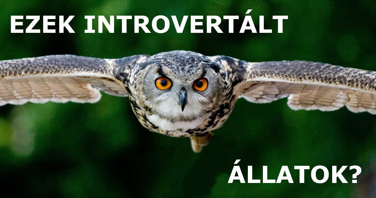 Ezek introvertált állatok az MBTI besorolás alapján