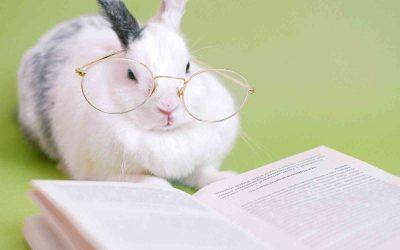 Állatok iskolája – Tanmese az erősségekről és a gyengeségekről
