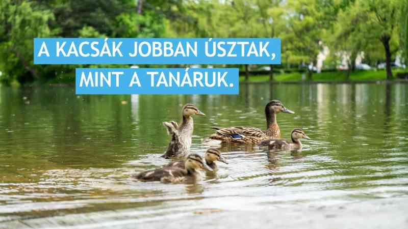 kacsák jobban úsztak mint tanáruk.