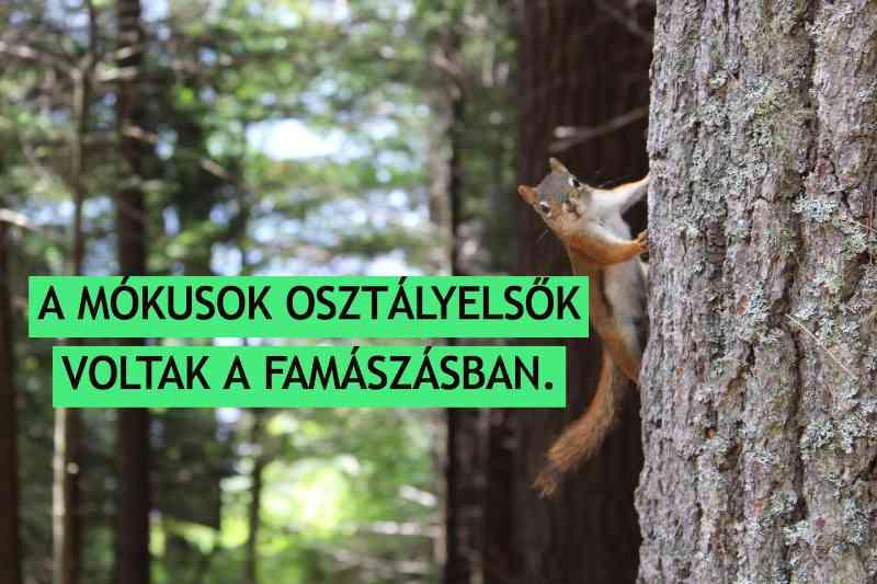 a mókusok osztályelsők voltak a famászásban